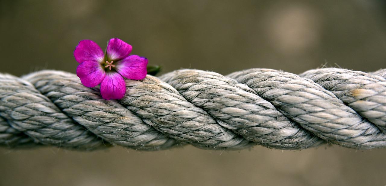 Hemp Fiber, Can Hemp Fiber Replace Cotton?