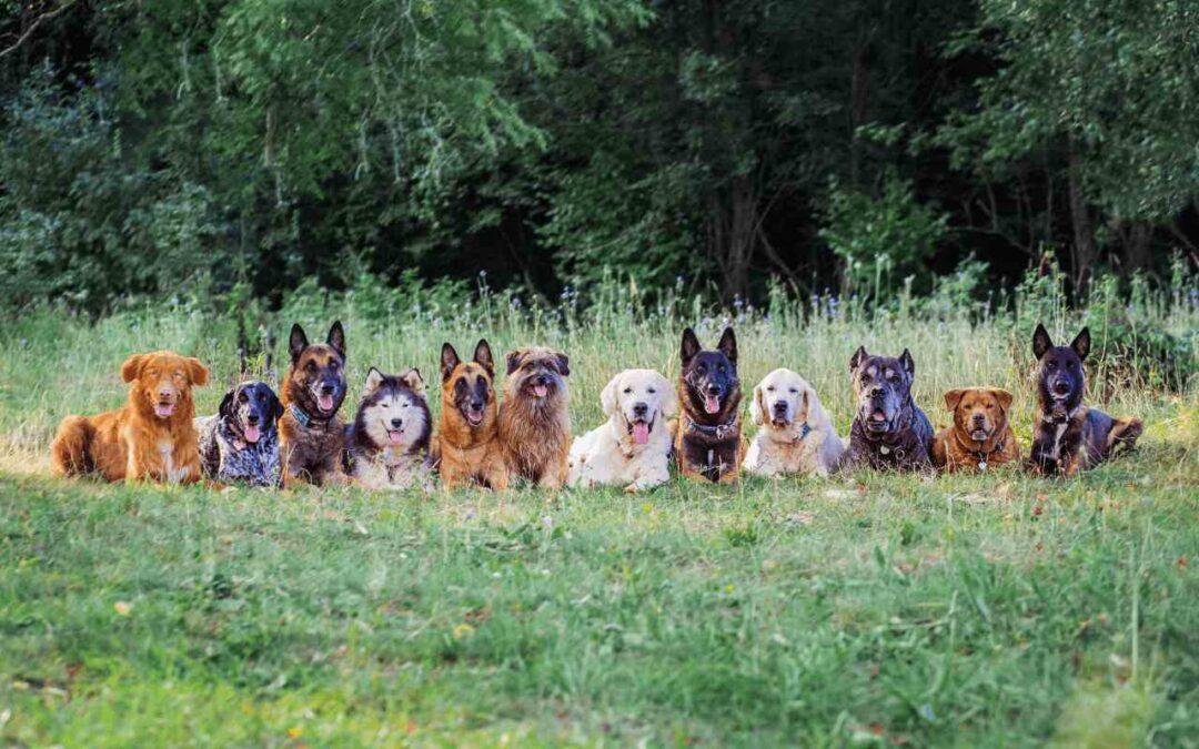 Top 10 Best CBD for Dogs - cbd flower usa
